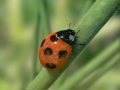 ladybird02