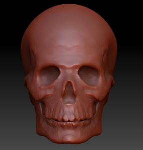 tajima_skull