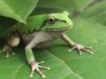 frog_complete_2k